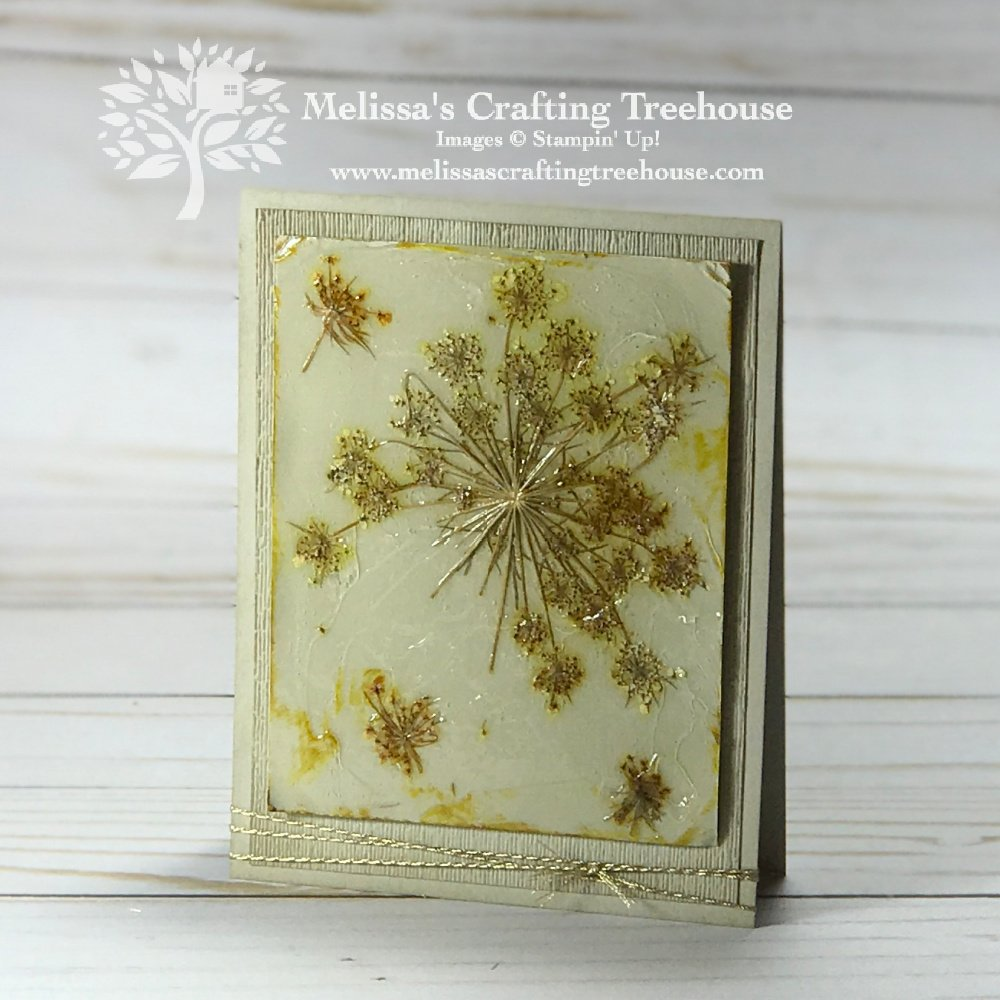 For today's projects, I'll show how to make cards with pressed flowers, fern leaves, and other plant matter!
